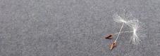 aliances i convenis - fundacio sanitara sant pere claver