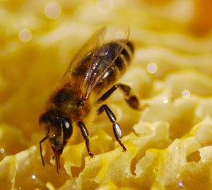 alergia-insectes