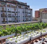 El terrat del Palau Foronda acull un nou hort amb capacitat per a 440 hortalisses que és gestionat pels usuaris i usuàries de les entitats de persones amb discapacitat del Centre Psicoteràpia Barcelona (CPB) i Centre Condal